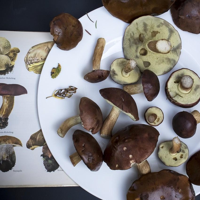 Mushrooms, safety, dangerous