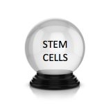 stem-cell-crystal-ball