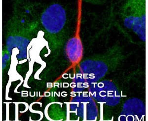 stem cell logo