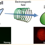 STAP Cell Update: New STAP-like paper, Obokata, Vacanti, Real Origin of STAP cells, & More