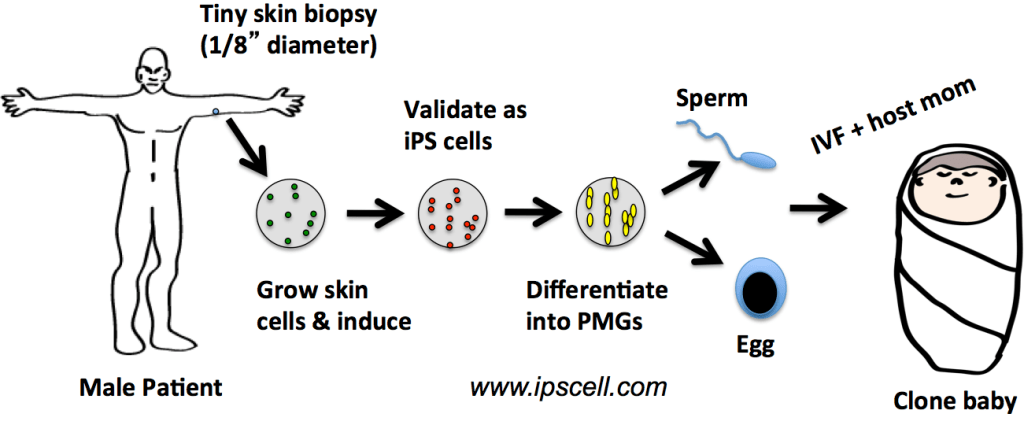 IPS-cell-cloning