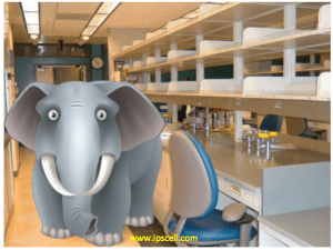 elephant in the lab