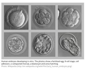 Early human embryos