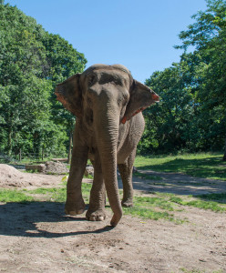 Happy The Elephant, science even if not medicine