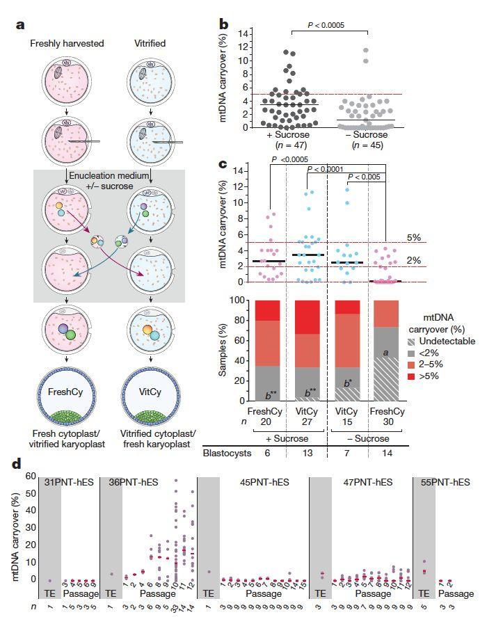 Herbert-mitochondria-Nature-paper