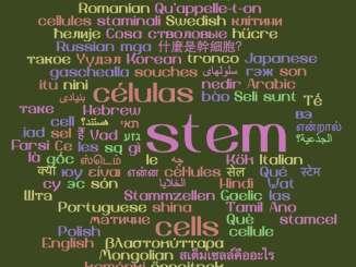 stem cells languages