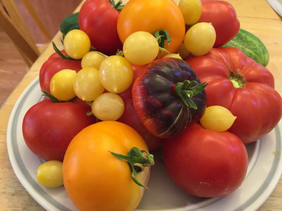 tomatoes-Sacramento-e1496682448570