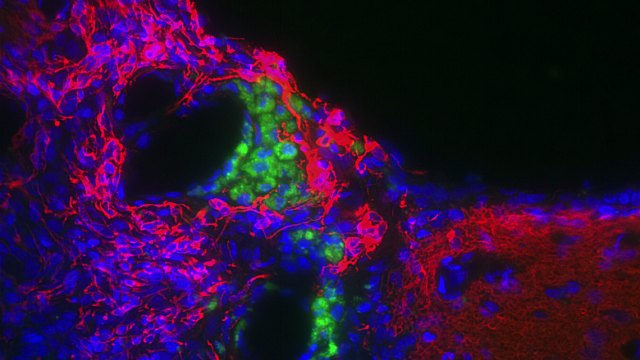 electricity stem cells