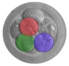 human embryo modification with CRISPR