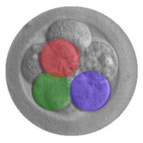 human-embryo-modification, ISSCR