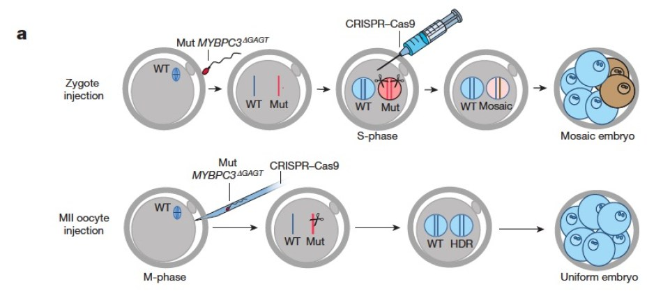Crispr Review Nature