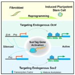 CRISPR to make IPS cells: review of new Ding lab paper