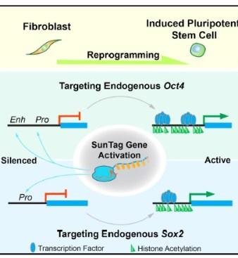 Liu et al Cell Stem Cell IPS cells 2018