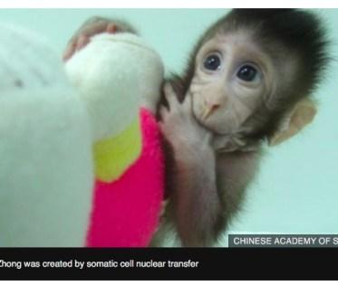 cloning monkeys