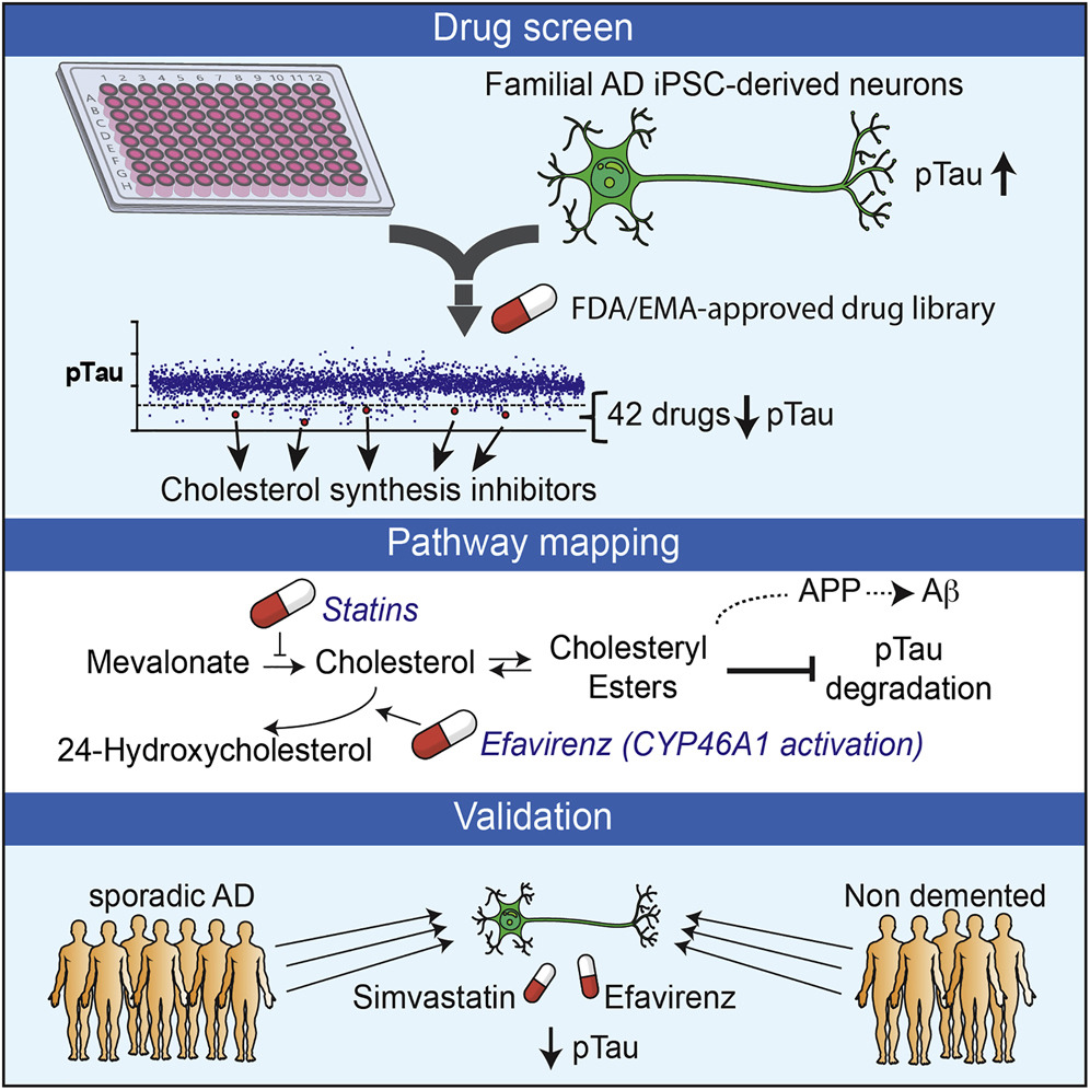 stem-cells-alzheimers