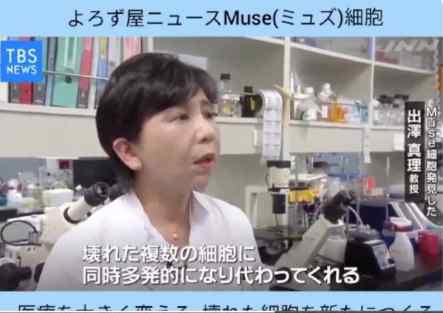 Professor Mari Dezawa talking about MUSE cells on national TV in Japan. Screenshot.