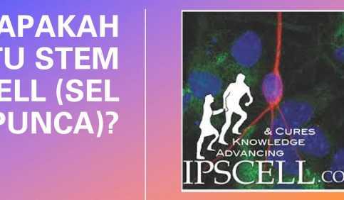 Stem cells in Indonesian Apakah itu stem cell sel punca
