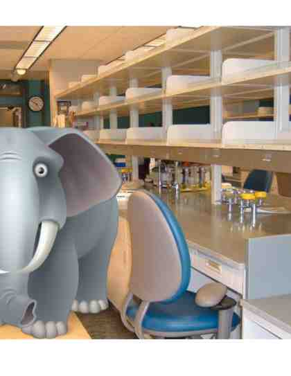 elephant in the lab, COVID-19 lab ramp-up plan
