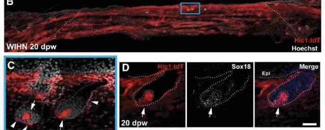 Abbasi et al Cell Stem Cell 2020 Fig 3