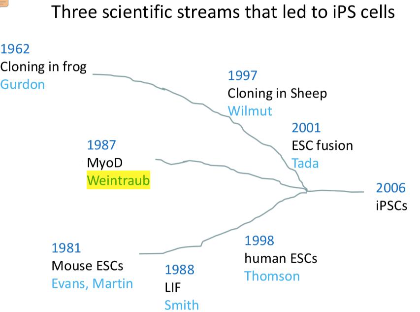 Shinya Yamanaka, history of iPS cells