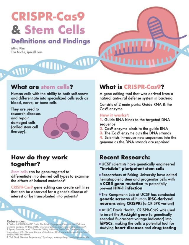 CRISPR infographic stem cells