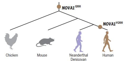 brain organoids trujillo et al 2021