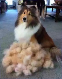 Grooming Dogs with Long Coats