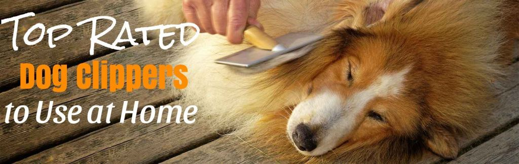 Best cordless dog clippers for professional dog grooming
