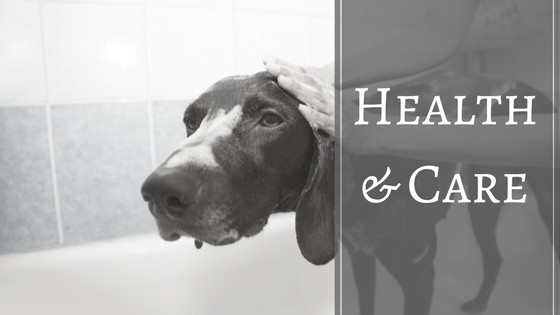 Pet Health Care and Grooming