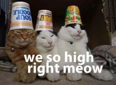 a4951_ORIG-high_meow