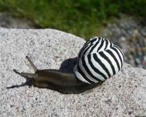 painted-snail-shell-20