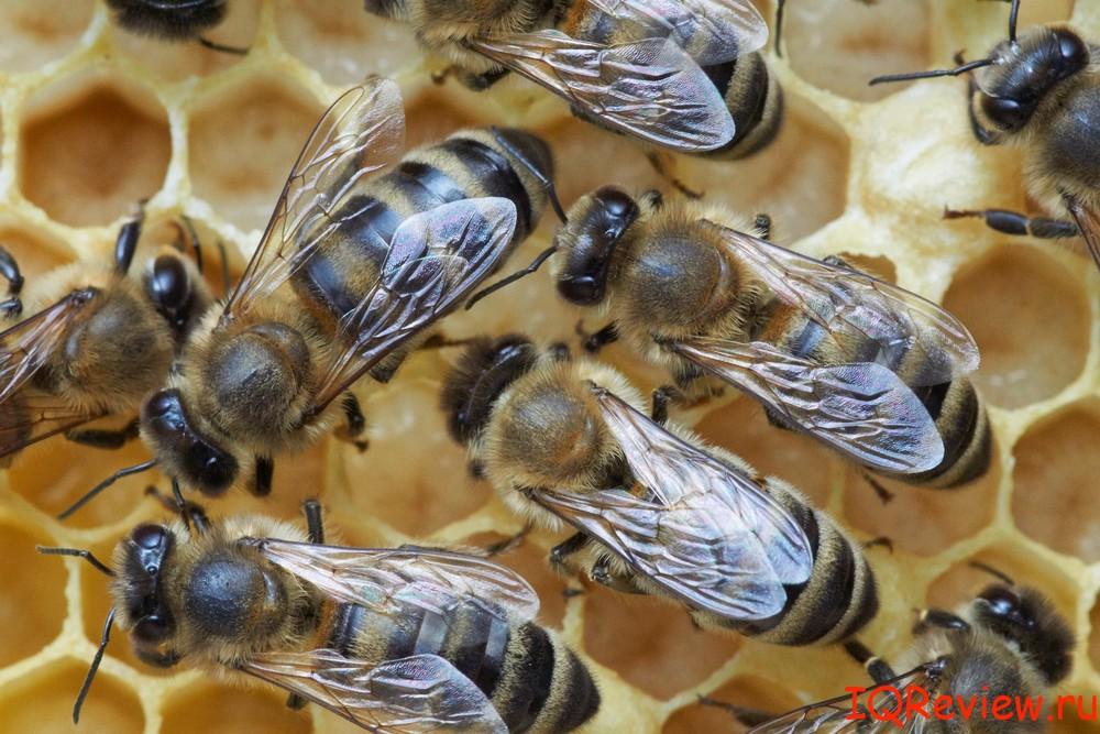 albinele fac bani online