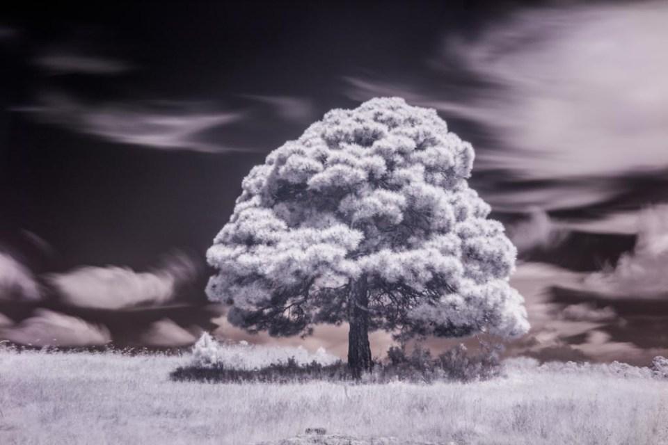 Fotografía con espectro de luz Infraroja por Iram Ortega