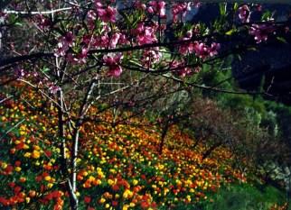 delgosha_garden