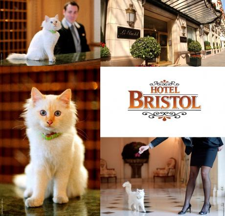 Bristol chat room