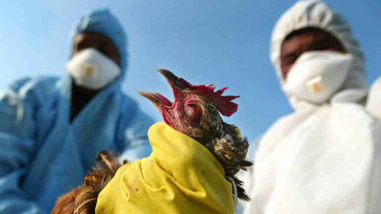 Time for preventive mobilization on bird flu
