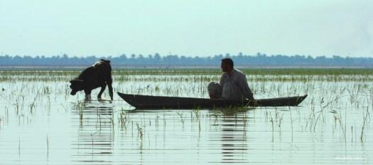 Iraqi Marshlands - الأهوار في العراق