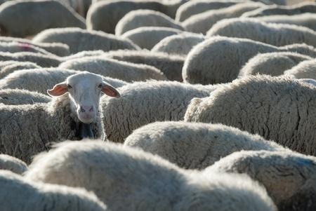 Wool Health Benefits