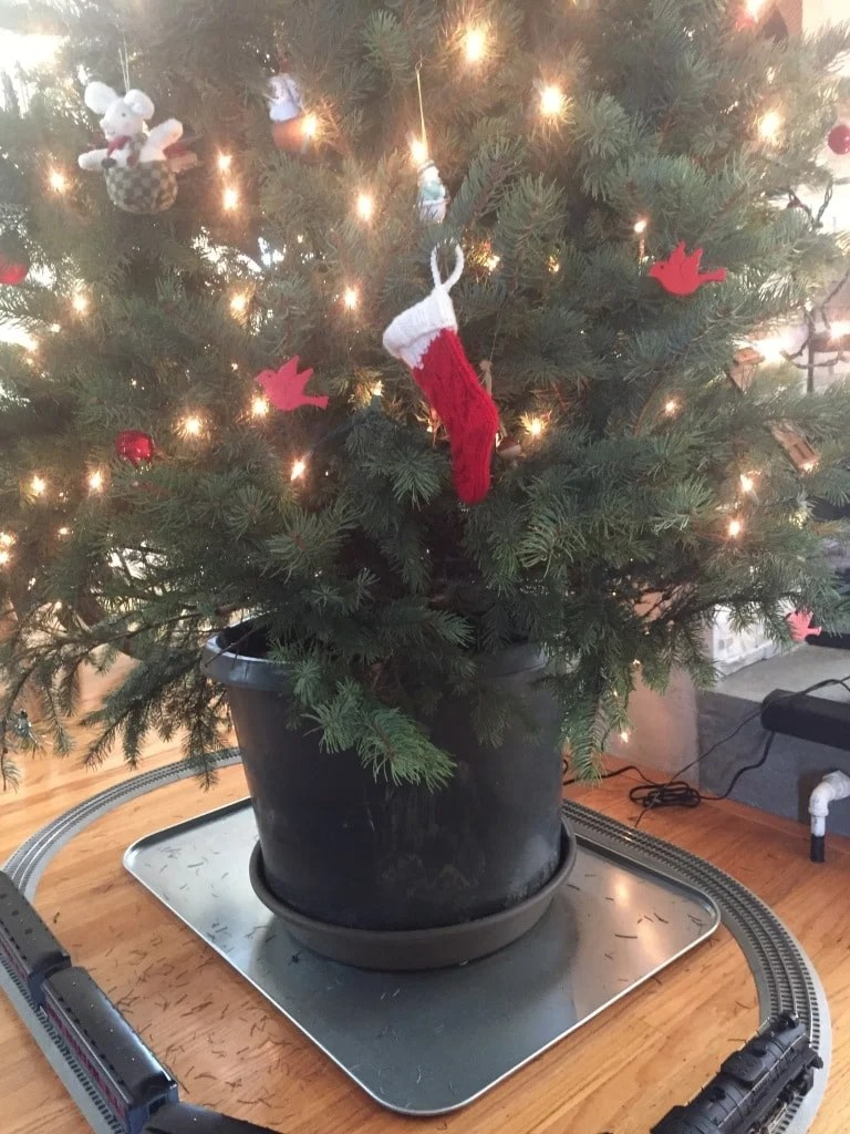 Non-Toxic Christmas Tree