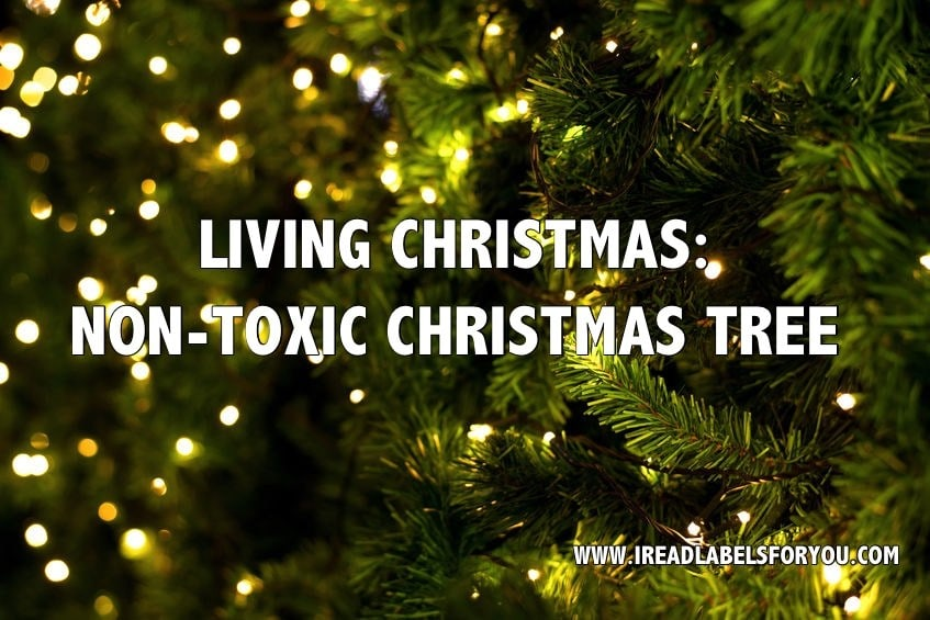 LIVING CHRISTMAS NON-TOXIC CHRISTMAS TREE