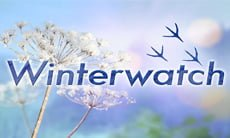 BBC Winterwatch