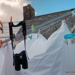 Washing Line Wildlife -- you never know what you might see!