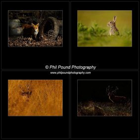 The winning Wildlife Portfolio at the IPPA Awards 2014