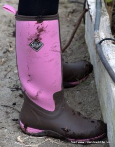 Muck Boots in the garden