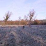 Frosty-day-December-2014