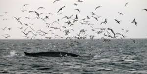 Seabirds and whales