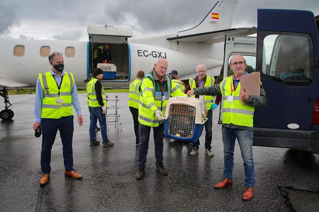 Irish White Tailed Eagle Population Boost