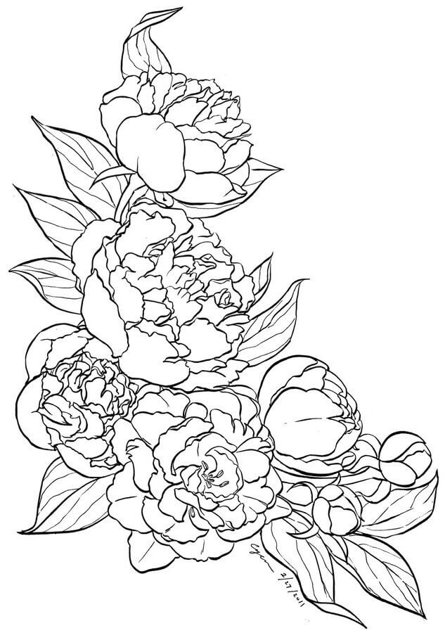 Flowers Drawings Outlines