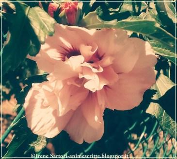 Leggeri spazi s'aprono al cuore... di un fiore che nulla conosce, ma di tutto un sapore.