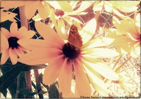 Tenue luce si accende nel sole, mentre un fiore oscura il cielo.